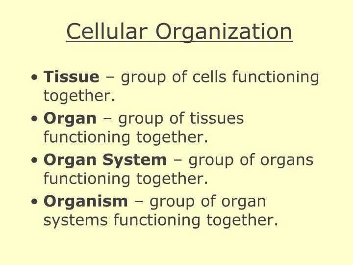 Cellular Organization