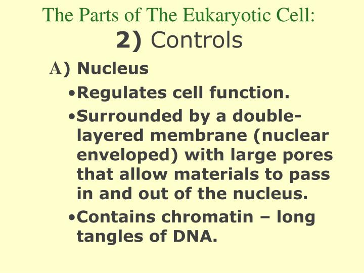 The Parts of The Eukaryotic Cell: