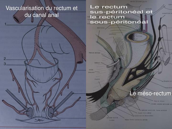 Vascularisation du rectum et