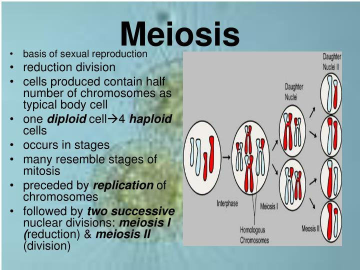 meiosis reduces chromosome number and rearranges genetic information essay Meiosis reduces chromosome number and rearranges genetic bthe recombination of dna strands during meiosis cthe uptake of genetic information by a cell from.