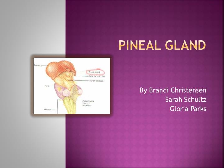 P ineal gland
