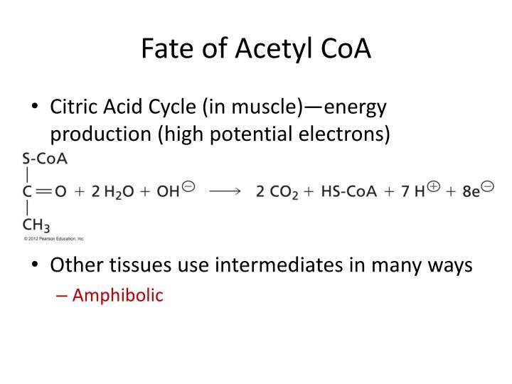 Fate of Acetyl CoA