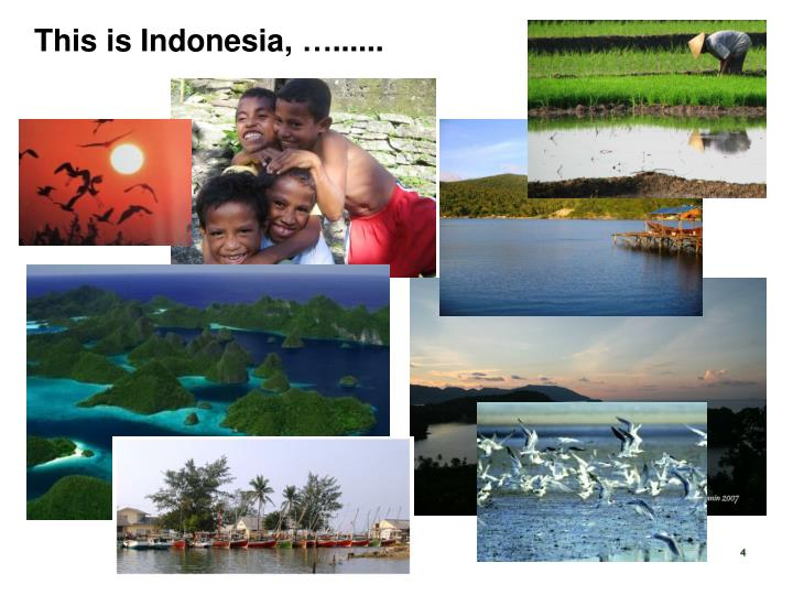 This is Indonesia,