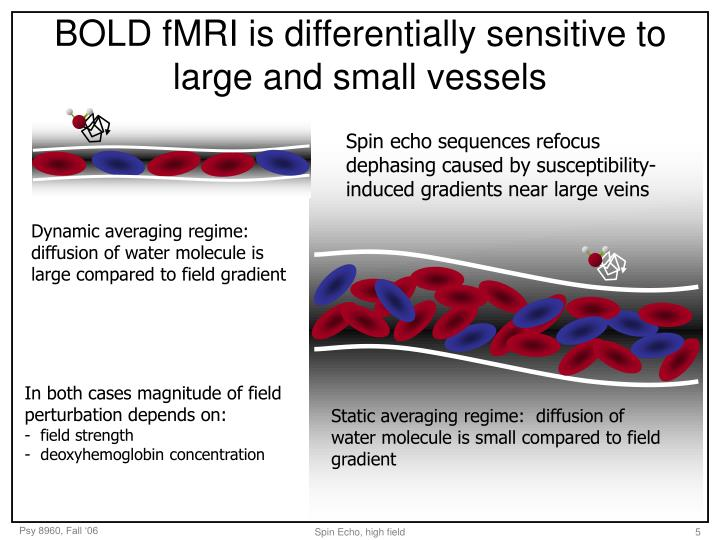 BOLD fMRI is differentially sensitive to large and small vessels