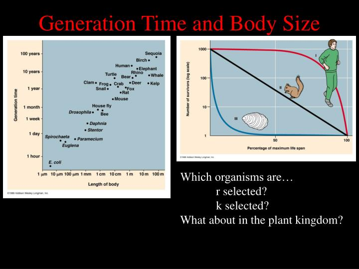 Generation Time and Body Size