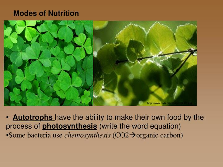 what plants use chemosynthesis