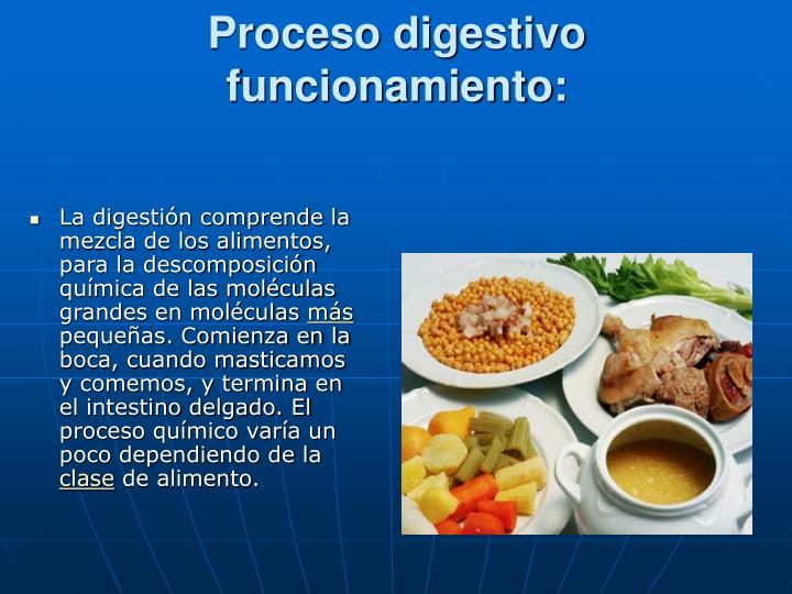 Proceso digestivo funcionamiento: