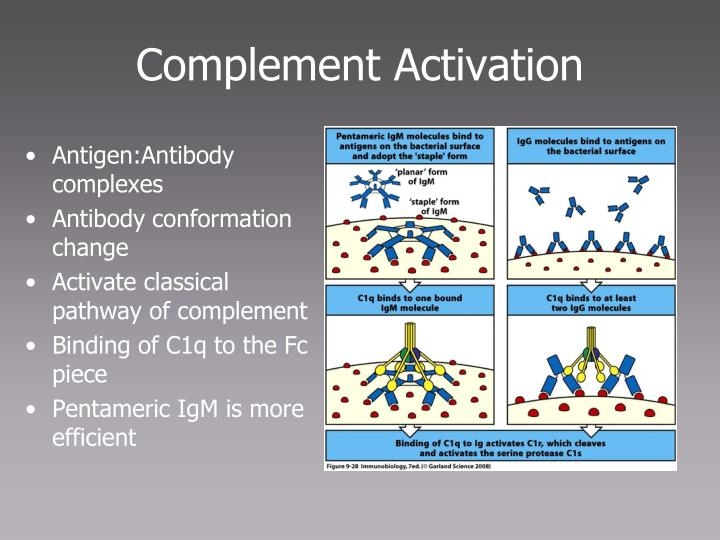 Antigen:Antibody complexes