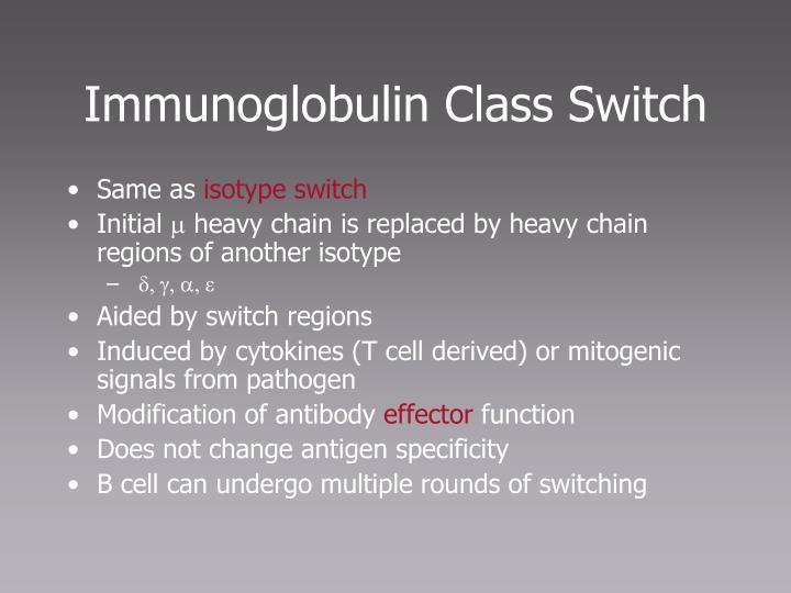 Immunoglobulin Class Switch