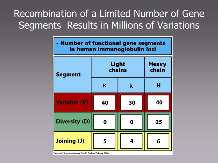 Recombination of a Limited Number of Gene Segments  Results in Millions of Variations