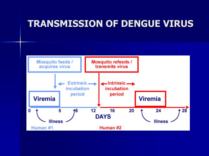 TRANSMISSION OF DENGUE VIRUS