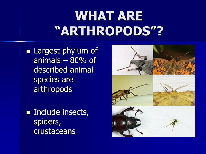 What are arthropods