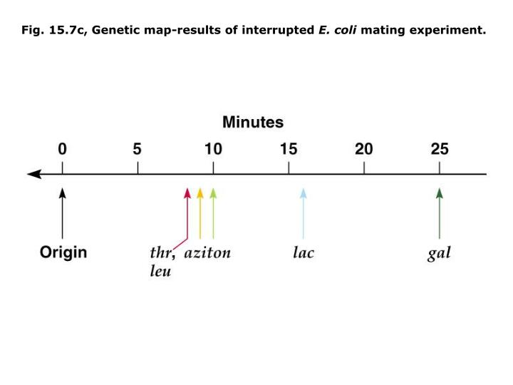 Fig. 15.7c, Genetic map-results of interrupted