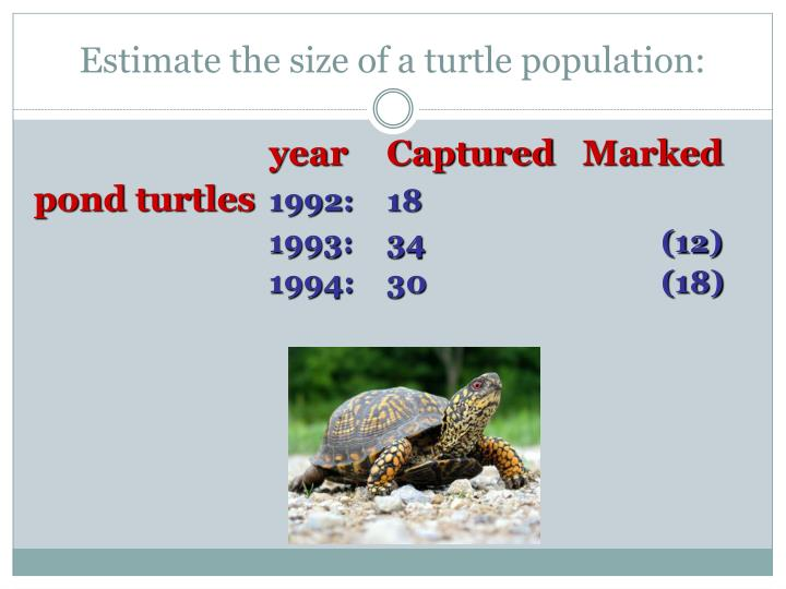 Estimate the size of a turtle population: