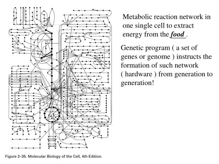Metabolic reaction network in one single cell to extract energy from the