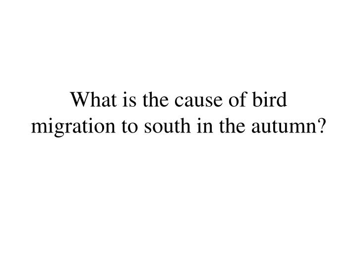 What is the cause of bird migration to south in the autumn?