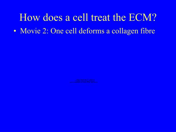 How does a cell treat the ECM?