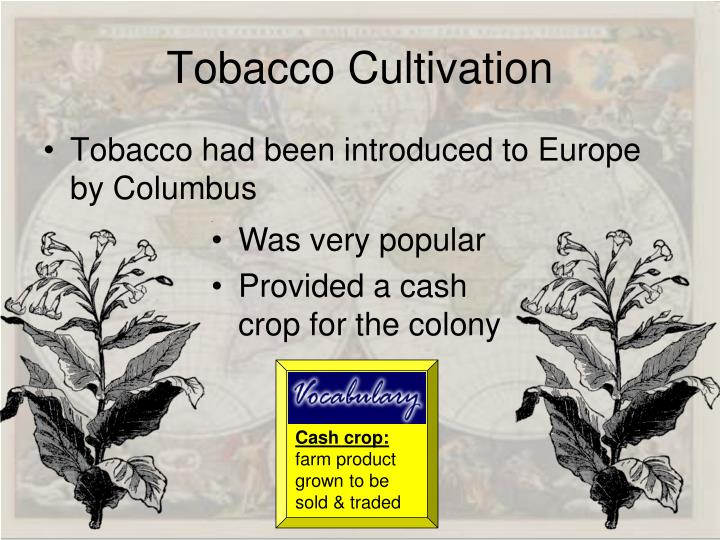 Cash crop: