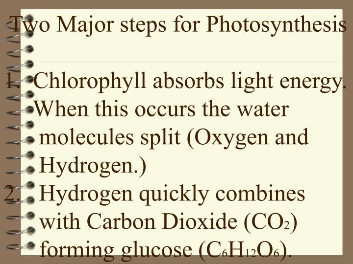 Two Major steps for Photosynthesis