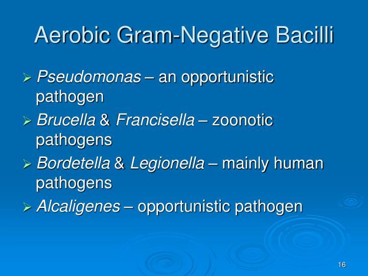Aerobic Gram-Negative Bacilli