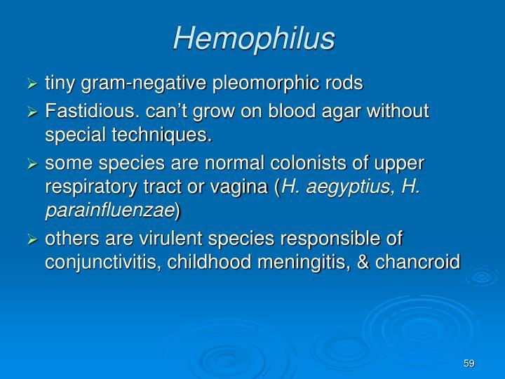 Hemophilus