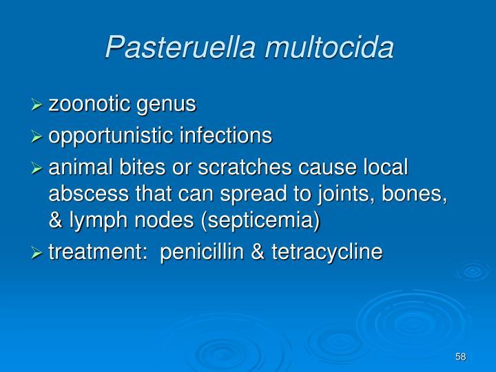 Pasteruella