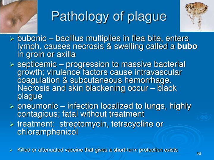 Pathology of plague