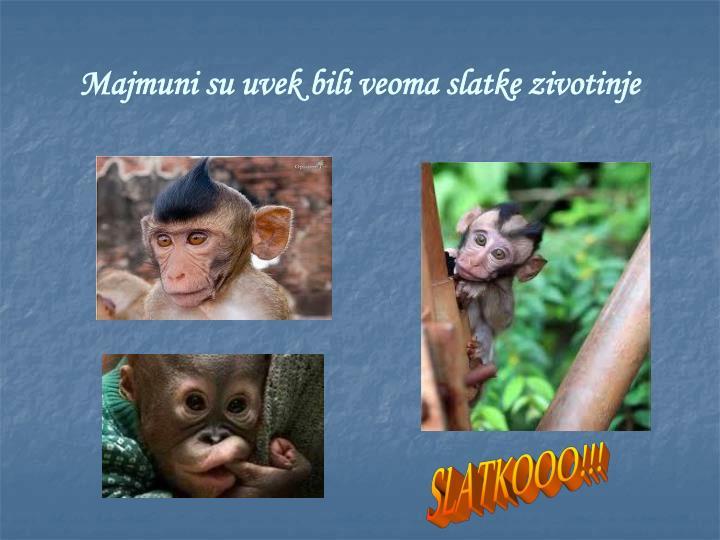 Majmuni su uvek bili veoma slatke zivotinje