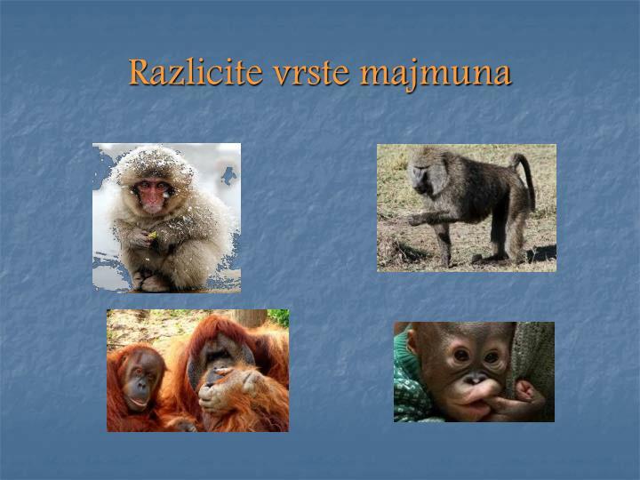 Razlicite vrste majmuna