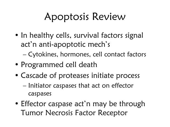 Apoptosis Review