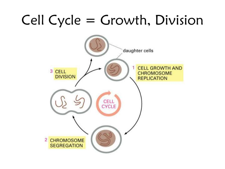 Cell Cycle = Growth, Division