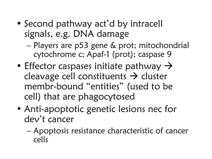 Second pathway act'd by intracell signals, e.g. DNA damage