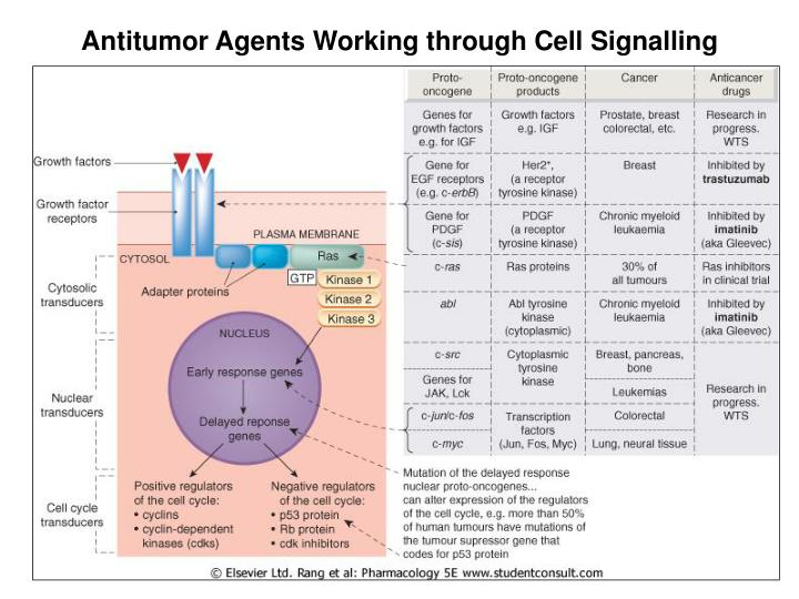 Antitumor Agents Working through Cell Signalling