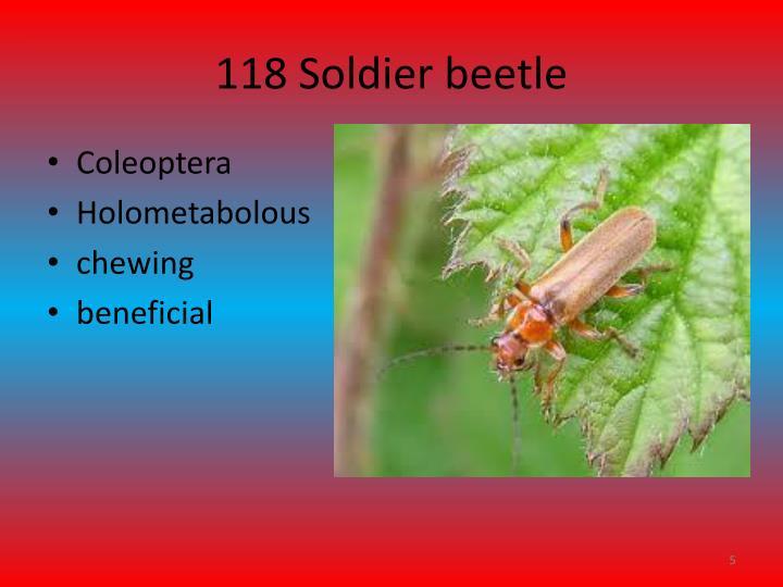 118 Soldier beetle