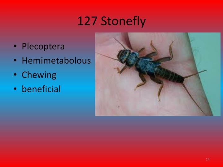 127 Stonefly