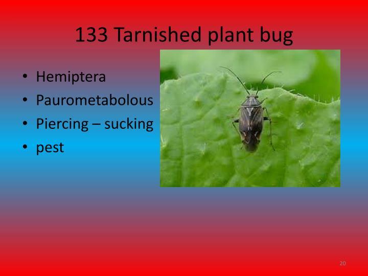 133 Tarnished plant bug