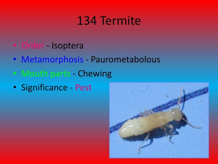 134 Termite