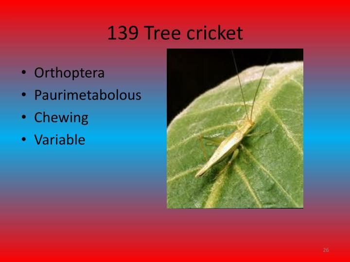 139 Tree cricket