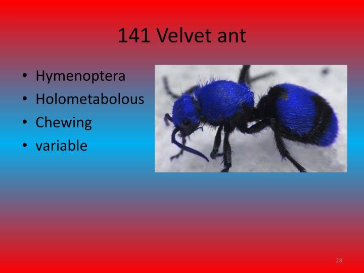 141 Velvet ant