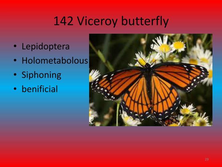 142 Viceroy butterfly