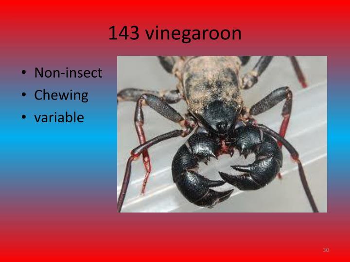 143 vinegaroon