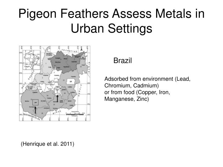 Pigeon Feathers Assess Metals in Urban Settings