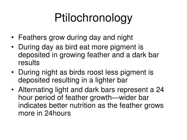 Ptilochronology