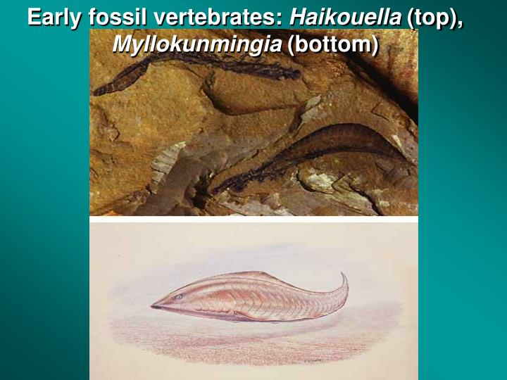 Early fossil vertebrates: