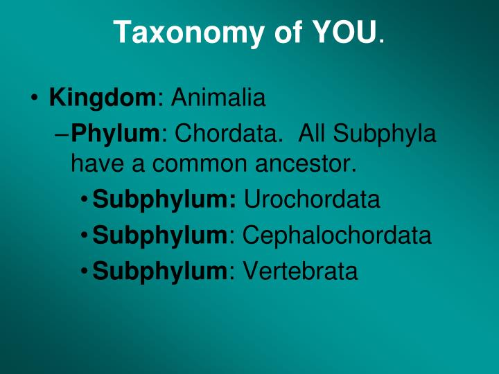Taxonomy of YOU
