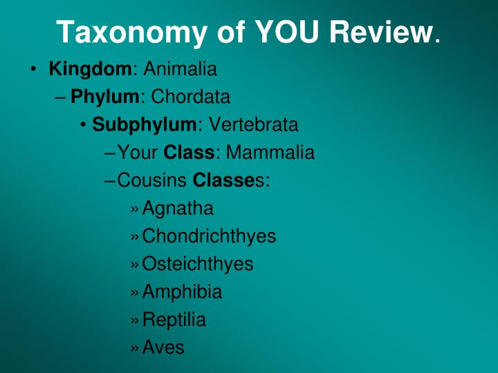 Taxonomy of YOU Review