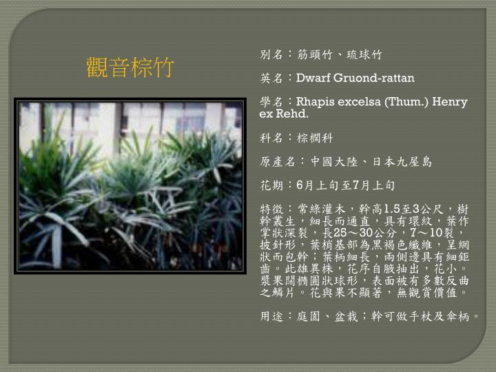 別名:筋頭竹、琉球竹