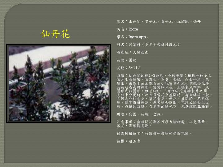 別名:山丹花、買子木、賣子木、紅繡球、仙丹