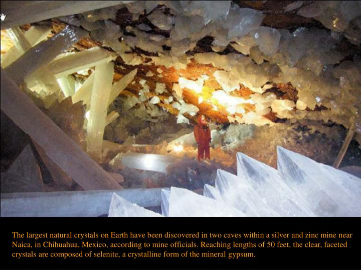 The largest natural crystals on Earth have been discovered in two caves within a silver and zinc mine near Naica, in Chihuahua, Mexico, according to mine officials. Reaching lengths of 50 feet, the clear, faceted crystals are composed of selenite, a crystalline form of the mineral gypsum.