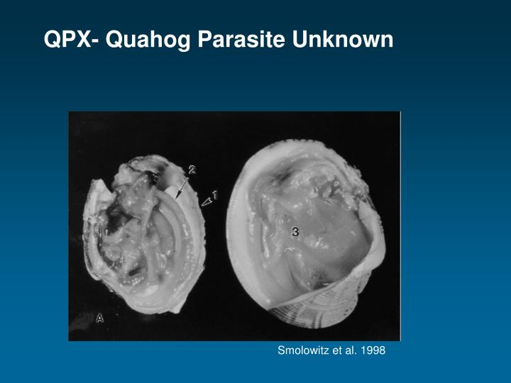 QPX- Quahog Parasite Unknown